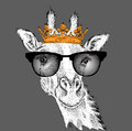Hand draw Image Portrait giraffe in the crown. Use for print, posters, t-shirts. Hand draw vector illustration