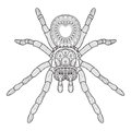 Hand draw of spider in Zentangle style. vector illustration. Royalty Free Stock Photo