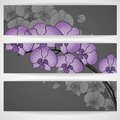 Hand drawing orchid flower vector illustration eps Stock Image