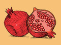 Hand drawing pomegranate red fresh Royalty Free Stock Photos