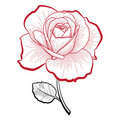 Hand drawing rose Stock Images