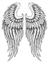 Hand drawn angel wings vector of Stock Photos