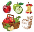 Hand drawn apples vector red and green Stock Photos
