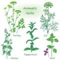 Hand drawn aromatic herbs set.