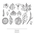 Hand drawn autumn beautiful set of leaves, flowers, branches, mushroom and berries, isolated on white background. Black and white