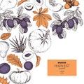 Hand drawn banner of autumn harvest fruits, vegetables. Vector vintage engraved style. Pumpkin, plum, oak, mapple