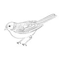 Hand drawn bird vector illustration Royalty Free Stock Photo