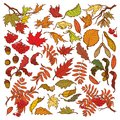 Hand drawn branches and leaves of temperate forest trees. Autumn colored floral set isolated on white background. Maple