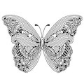Hand drawn butterfly zentangle style Royalty Free Stock Photo
