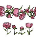 Vector set of peony design elements and pattern brush