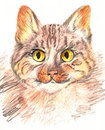 Hand-drawn cat Royalty Free Stock Images