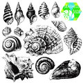 Hand drawn collection various seashell illustrations isolated white background Royalty Free Stock Photography