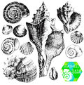 Hand drawn collection various seashell illustrations isolated white background Stock Photo