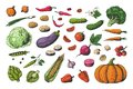 Hand drawn colored vegetables. Food sketch collection, healthy vegan garden vegetables. Vector carrot potato tomato Royalty Free Stock Photo