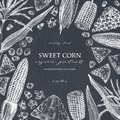 Hand drawn corn design on chalkboard. Vector food sketches. With Maize plant, corn cob and grains. Botanical drawing of vintage