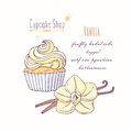 Hand drawn cupcake with doodle buttercream for pastry shop menu. Vanilla flavor