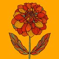 Hand drawn Dahlia flower Royalty Free Stock Photo