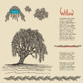 Hand drawn decorative Willow tree. Vector illustration