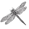 Hand drawn dragonfly in zentangle style Royalty Free Stock Photo
