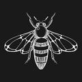 Hand drawn engraving Sketch of  Bee. Vector illustration for tat Royalty Free Stock Photo