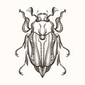 Hand drawn engraving Sketch of  Beetle, May bug. Vector illustra Royalty Free Stock Photo