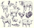 Hand drawn farm animals and birds. Goat, duck and horse, sheep and cow, pig and rooster, rabbit and turkey, chicken and