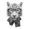 Hand drawn fashion illustration of tiger vector isolated elements Royalty Free Stock Images