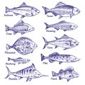 Hand drawn fishes. Ocean sea river fishes sketch fishing seafood herring tuna salmon anchovy trout perch pike