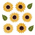 Hand drawn flat Sunflower vector illustration Royalty Free Stock Photo