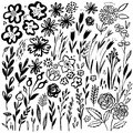 Hand drawn floral set. Vector floral elements. Collection with leaves and flowers. Royalty Free Stock Photo