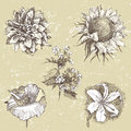 Hand drawn flowers highly detailed in retro style Royalty Free Stock Image