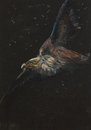 Hand drawn flying eagle pastel drawing colorful of a on black background Stock Image