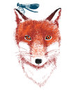 Hand drawn fox and dragonfly Royalty Free Stock Photo