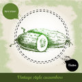 Hand drawn fresh cucumbers. Vintage sketch style organic eco vegetable Royalty Free Stock Photo