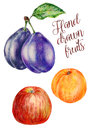 Hand-drawn fruits, isolated fruits on a white background, apple, apricot and plum