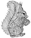 Hand drawn funny squirrel with nut  for adult anti stress Colori Royalty Free Stock Photo