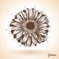 Hand drawn gerbera flower. Royalty Free Stock Photo