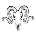 Hand Drawn goat skull doodle vector illustration. Dotwork fullf