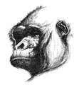 Hand drawn gorilla eps realistic Stock Images