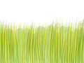 Hand drawn green grass on white background
