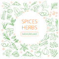 Hand drawn herbs and spices vector healthy natural plants background