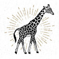 Hand drawn icon with textured giraffe vector illustration