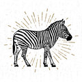 Hand drawn icon with textured zebra vector illustration