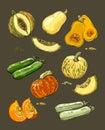 Hand drawn illustration of pumpkin Royalty Free Stock Photo