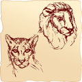 Hand drawn ink portrait sketch lion cheetah heads Stock Images