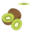 Hand drawn kiwi isolated on white background. Royalty Free Stock Photo