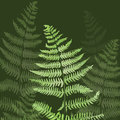 Hand drawn leaf of a fern Royalty Free Stock Photos