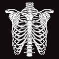 Hand Drawn Line Art Anatomical...