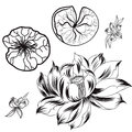 Hand drawn lotus isolate vector set and Japanese tattoo Royalty Free Stock Photo