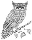 Hand drawn magic Owl sitting on branch for adult anti stress Col Royalty Free Stock Photo